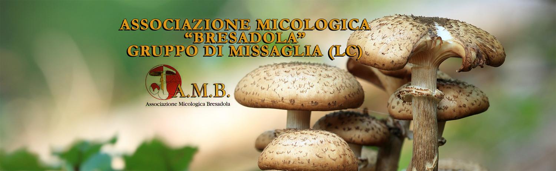 Gruppo AMB Missaglia (LC)